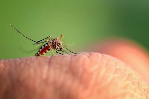 Mosquito Mist entenda o porquê da técnica ser mais eficaz dentre os meios de dedetização de mosquitos - Sani System