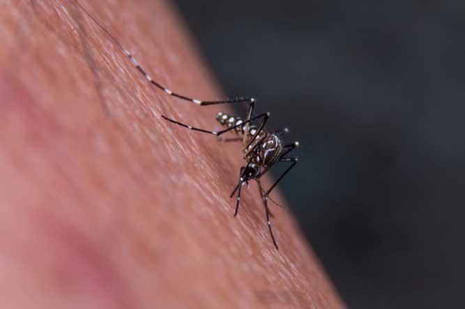 Mosquitos - Dedetização e Descupinização RJ