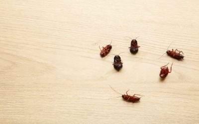 Conheça os estabelecimentos que podem ser alvo de uma infestação de baratas e a maneira certa de combatê-la