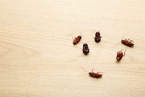 Conheça os estabelecimentos podem ser alvo de uma infestação de baratas e a maneira certa de combatê-la
