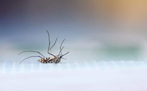 Sani System - Mosquito Mist: saiba mais sobre a técnica não poluente e biodegradável