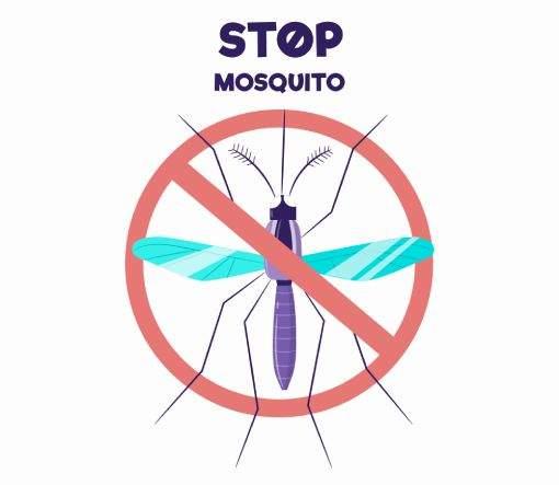 O que fazer para combater esses insetos? - Dedetização de mosquitos