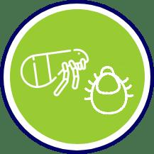 Pulgas e Carrapatos - Dedetização de Percevejos de Cama RJ