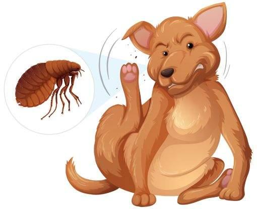 Como acabar com a infestação de pulgas nas residências?