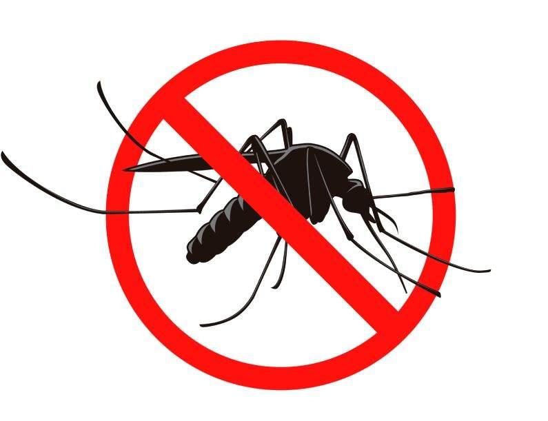 Dedetização de mosquitos: realizar o serviço no verão ou no inverno?